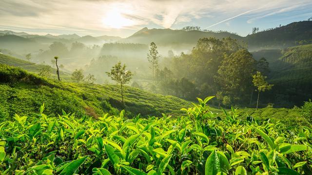 Indické Himaláje a Darjeeling