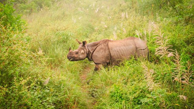 Národní park Chitwan