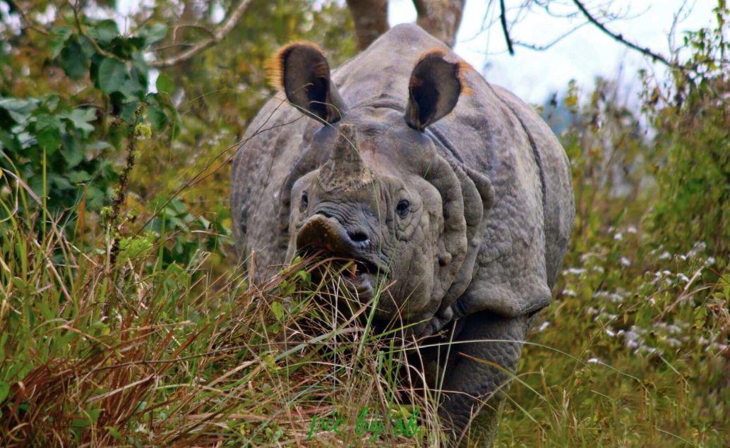 Nosorožci v Národním parku Chitwan