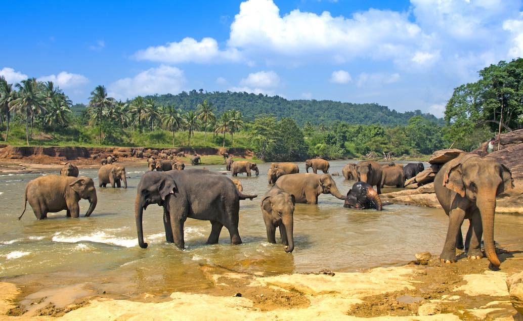 Sloni v národním parku Uda Walawe