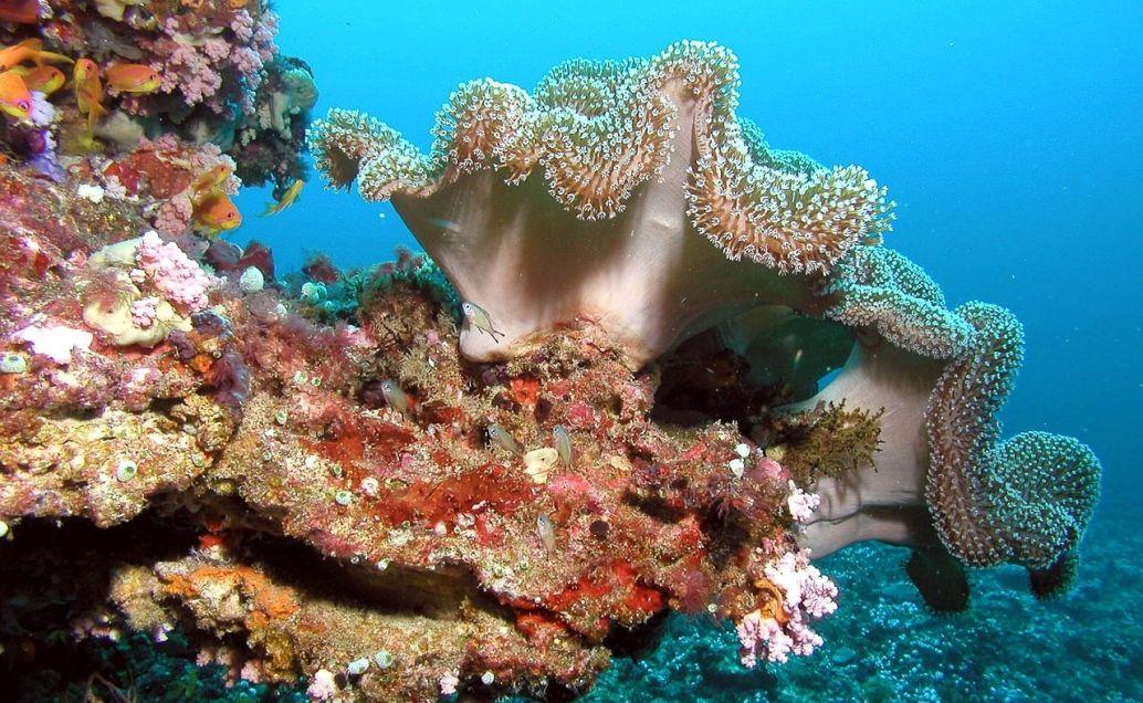 Podmořský svět Malediv