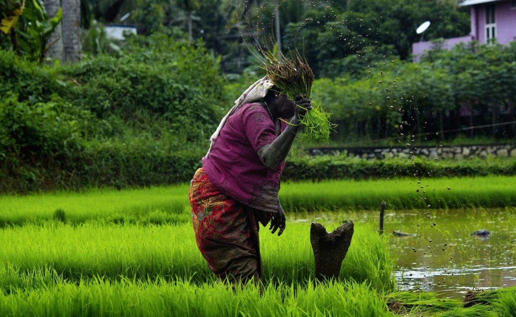 Život v Kerale