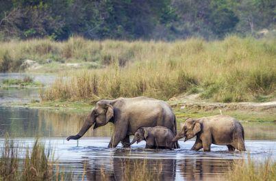 Nosorožci v Chitwan dobrodružně NEPÁL